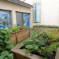 Jardin maraicher
